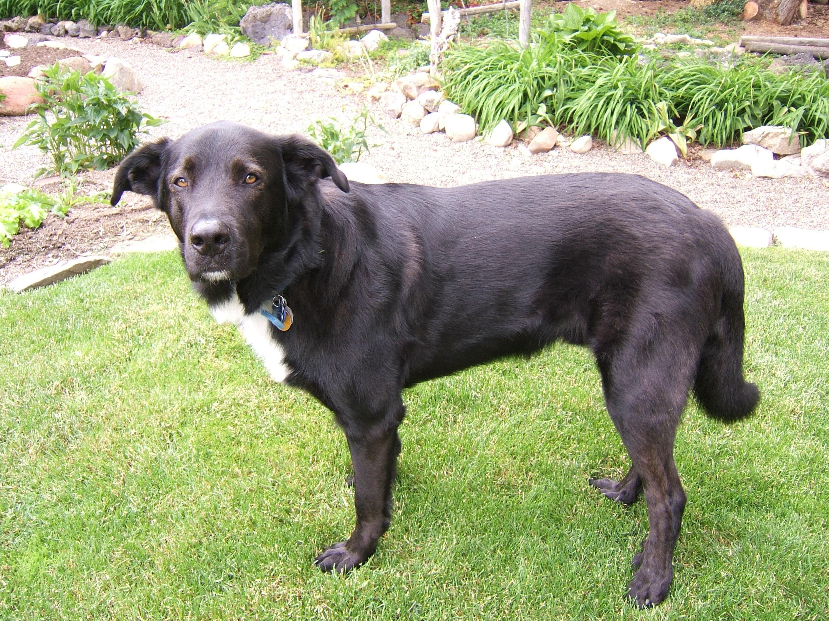 Big Black Dogs Big Enough To Eat People