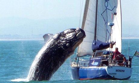 Moby-Dick-terrorises-sail-004