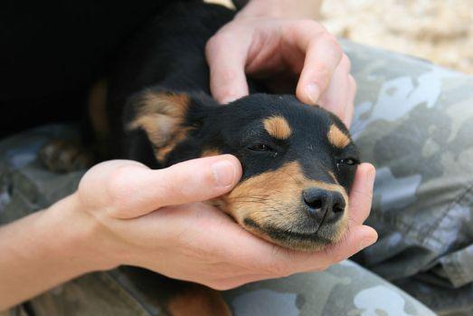 800px-Puppy_near_Coltani_-_17_apr_2010