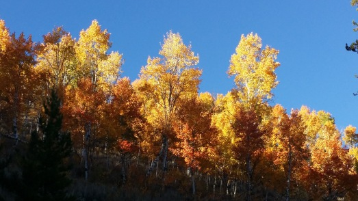 aspen-against-blue-sky-horizontal-yes