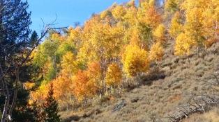 aspen-color-horizontal