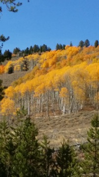 hillside-aspen-vertical